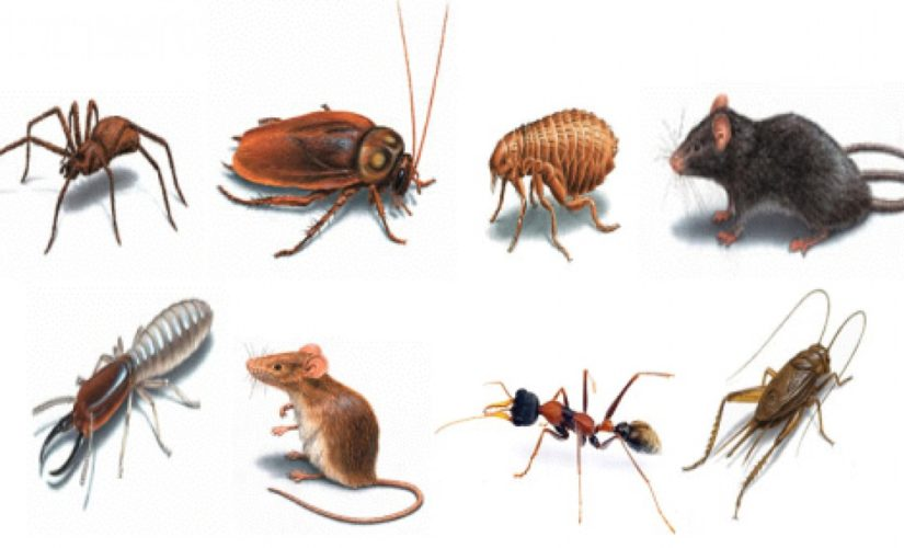 How Is A Pest Inspection Different To A Building Inspection?